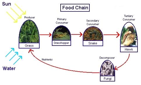 food chain for desert