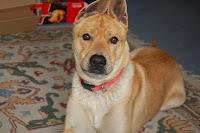 Psycho Wunderhund