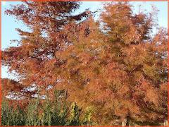 Teinture d'automne