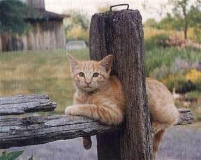 [cat12.htm]