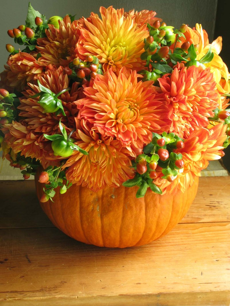 Sherris Jubilee Wonderful Autumn Ideas
