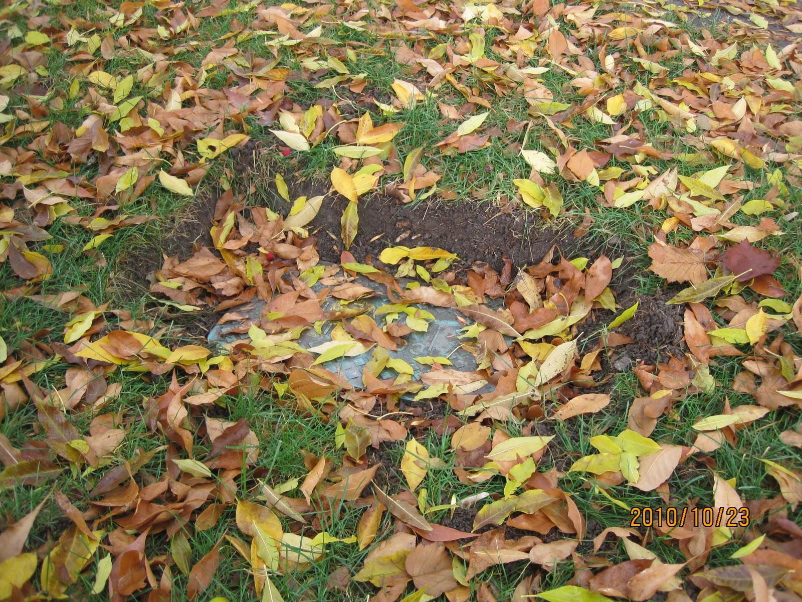 Swift\'s Gardening Blog - Swift Horticultural Enterprises, LLC: Are ...