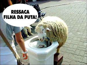 thirsty goat....