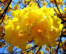 Flores en Tucumán