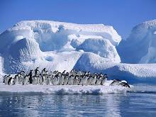 También tenemos pinguinos...