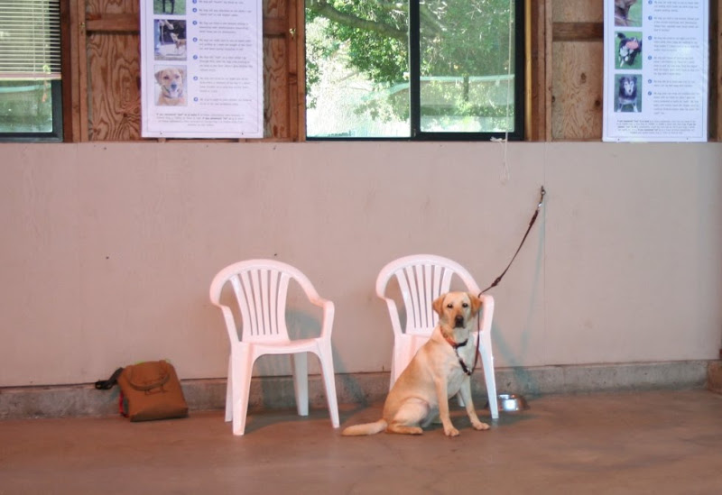 cabana sitting by two white plastic chairs, dog bowl on the ground, her leash clipped to an o-ring on the wall
