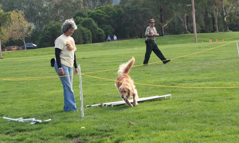roped off area in the grass where golden retriever Samantha and her handler are preparing to demonstrate heeling