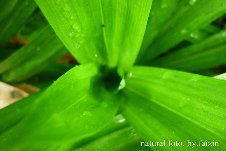 hijau alam