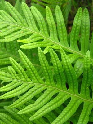 Fiorista mariangela la cura della felce - La felce pianta ...