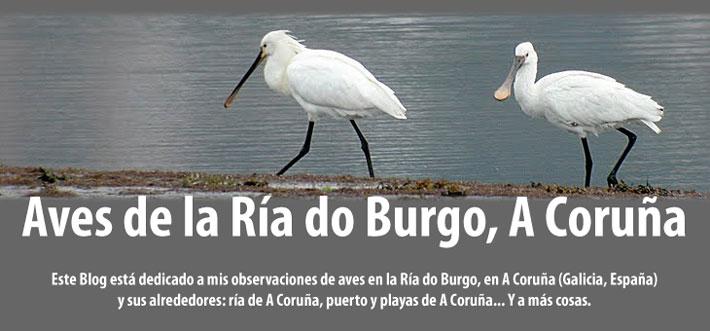 Aves de la Ría do Burgo, A Coruña