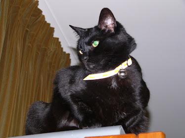 Better cat