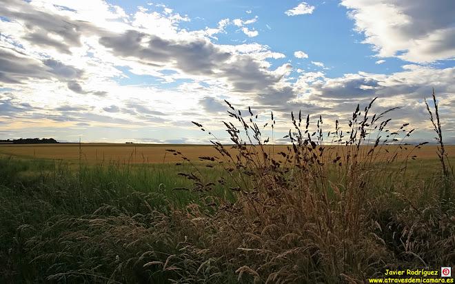 79 Un mar de trigo
