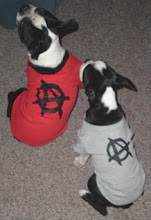 BOSTON TERRIER ANARCHIST DOGS