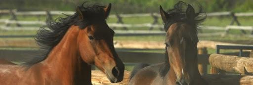 Horses Teach Humans