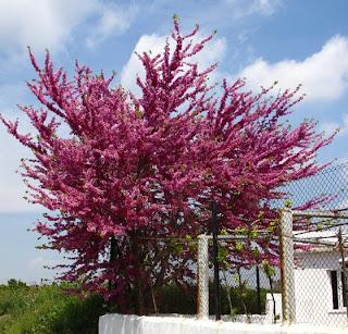 paisajismo y armonia arboles para veredas angostas