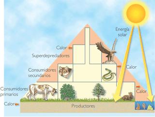 Definicion de comunidad en ecologia