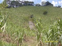 Actividad agrícola en la zona