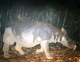 Help Save The Vietnamese Rhinoceros