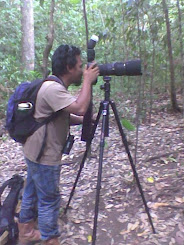tangkoko birdwatcher