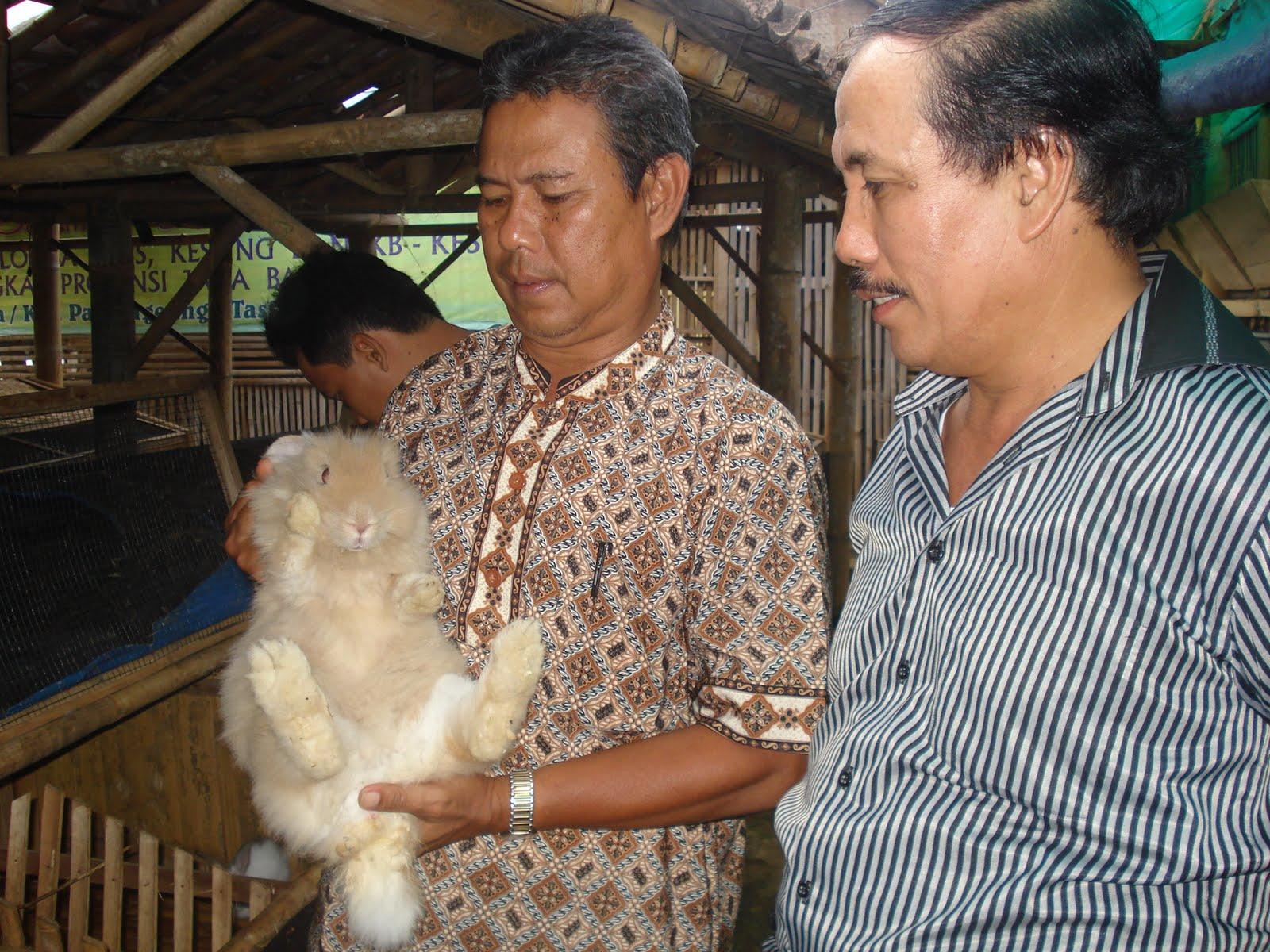 manfaat daging kelinci untuk kesuburan pria