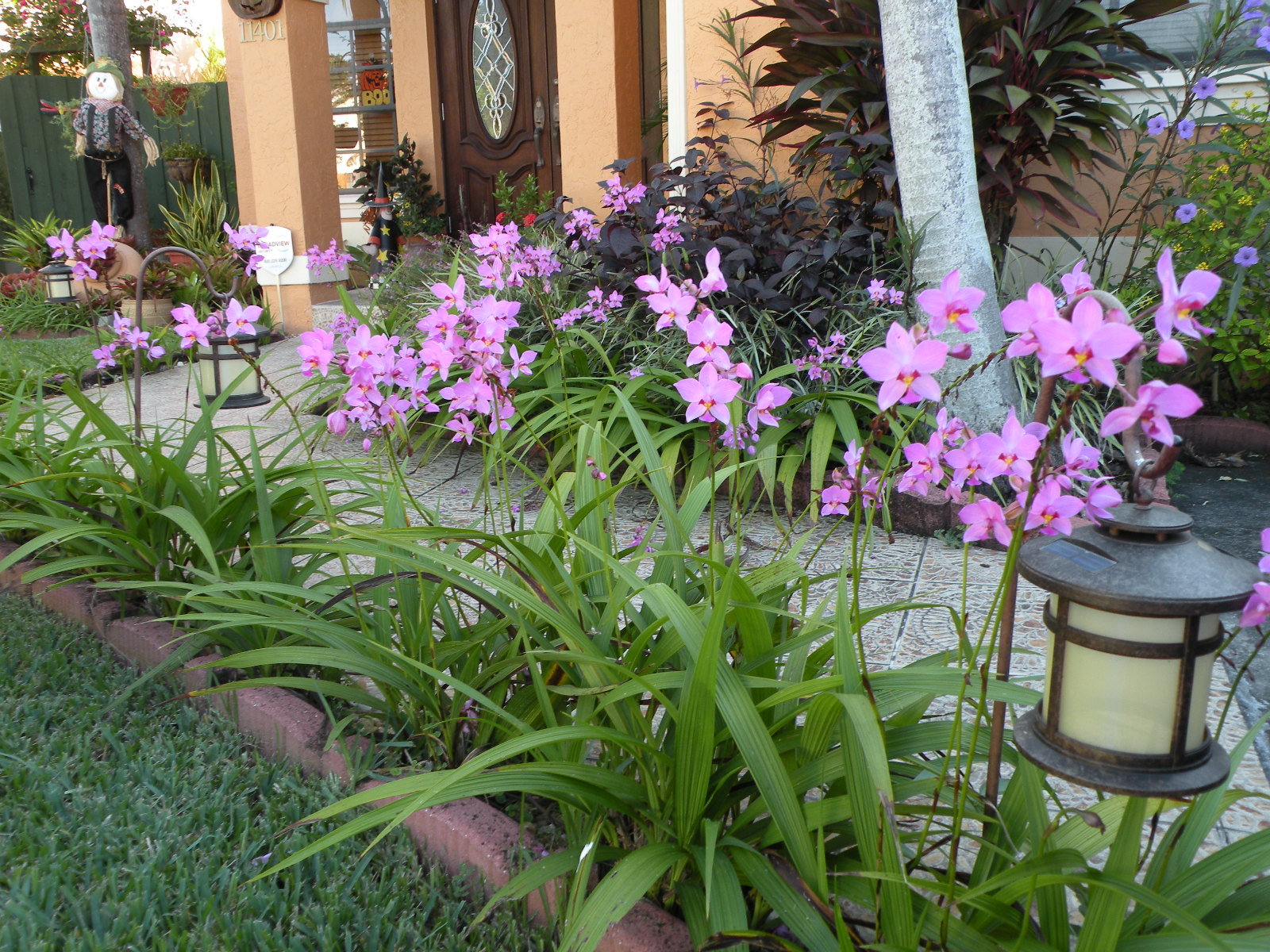 Ligustrum in addition Magnoliae moreover Herbs together with Bromeliads In Garden also Different Soilless Media For Growing Plants. on growing orchids in florida