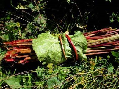 confiture de rhubarbe sauvage