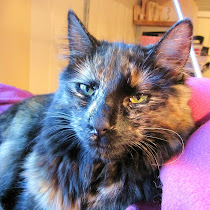Sofus(a) - lille kattungen vår...