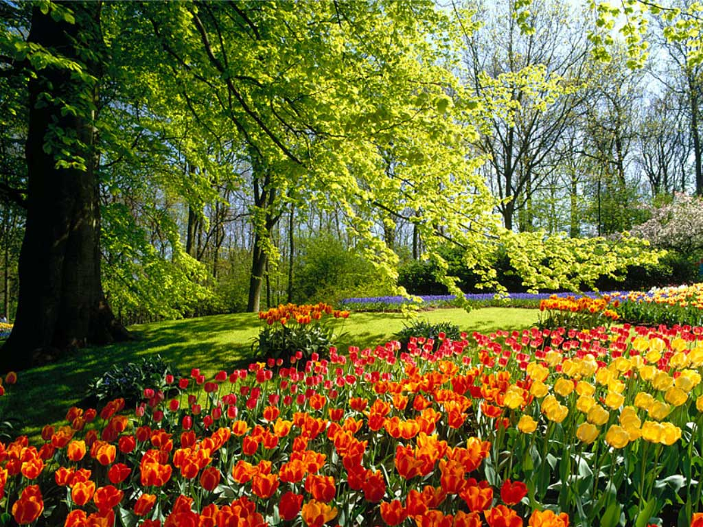 Paisaje floridos