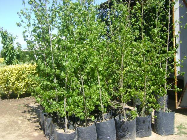 Construccion de jardines viveros de planta en maceta de Viveros y jardines