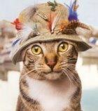 Ratinhos e Gatinhos!!!