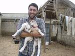 I love baby Goats