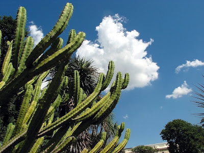 cacti in the botanical gardens by mike hitchen