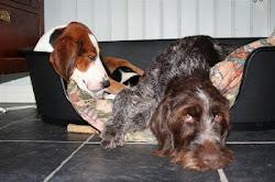 Vi har sängar för en eller flera hundar