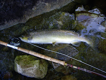 salmon a mosca