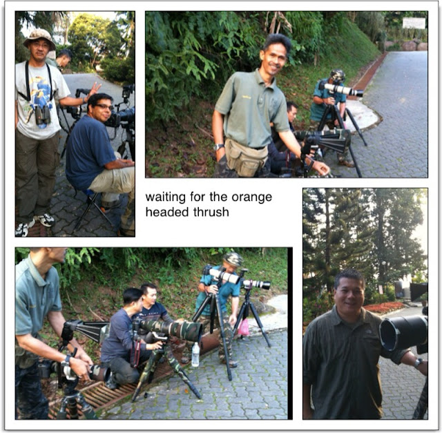 Bird Photographer at Bukit Tinggi, Pahang