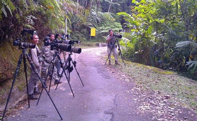 Bird photographer at Telecom Lop Fraser's Hill