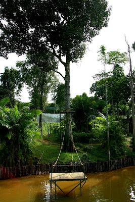 Orang Utan Tree Platform at Bukit Merah in Malaysia