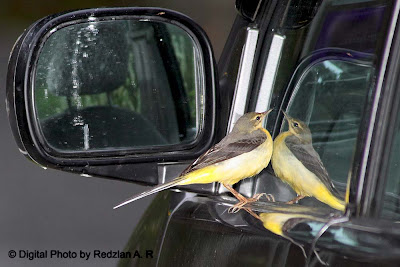 Wag Tail with Car's Mirror