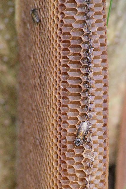 Abandones Bee Nest