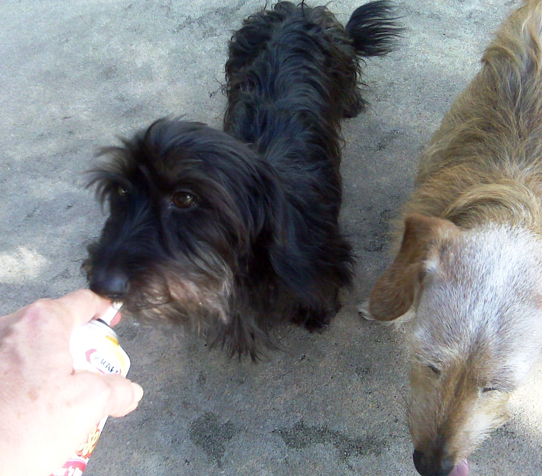 http://3.bp.blogspot.com/_MF0zdkjfH1M/THGz-s1ZVUI/AAAAAAAAAXs/btHJfGj-r4c/s1600/Minna+and+Ditto+with+Cheez.jpg