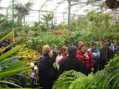 Taller de jardineria y limpieza de inmuebles del cabildo for Viveros gran canaria