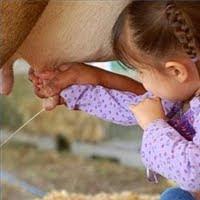 Consejos para ordeñar una vaca