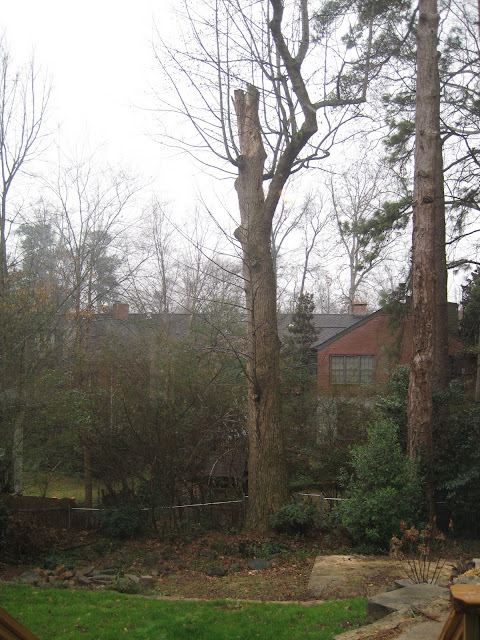 Tree Removal and the Dramatic Garage Remodel