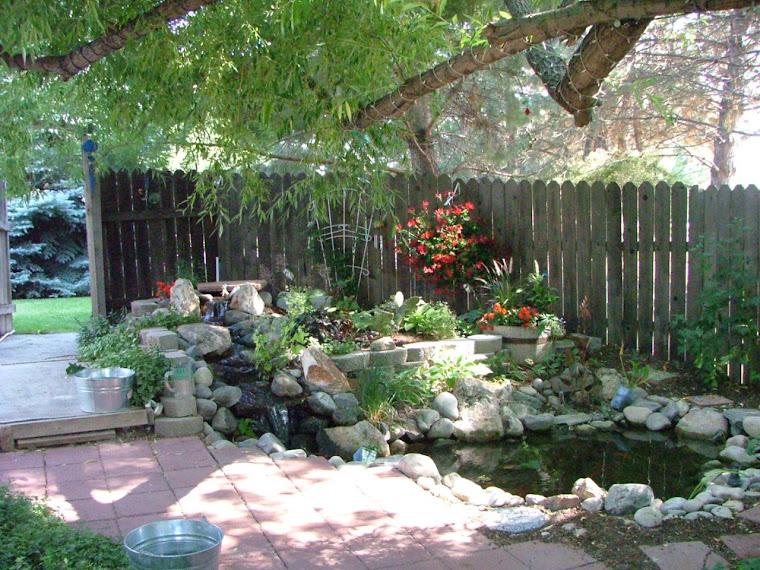 Pond August 2008