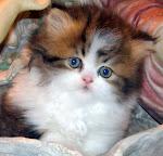 baby Nori :)