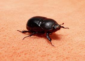 [escarabajo+patita.jpg]