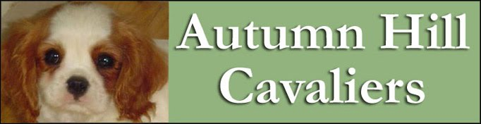 Autumn Hill Cavaliers