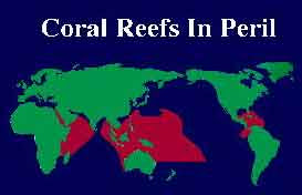 degradation of the coral reefs essay