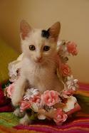 kedi bebeğim