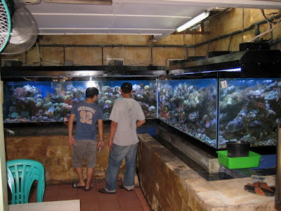 My coral adventures lfs local fish store jakarta part 1 for Local fish store